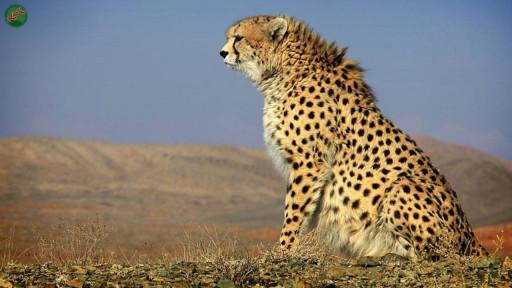 نام من یوزپلگ ایرانی است، حیوانی بزرگ و زیبا که در کوه ها و کوهستان های سرد زندگی می کند. من یک گونه محافظت شده هستم و همه می باید در جهت حفظ و بقای من کوشش کنند. لطفاً در صورت مشاهده این حیوان، تصویری از آن را به همراه نام و نام خانوادگی، سن و شهر محل زندگی خود برای ما به آدرس info@yarpress.com ارسال نمایید.