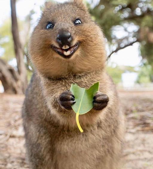 حیوانات هم خوشحالی خود را نشان می دهند