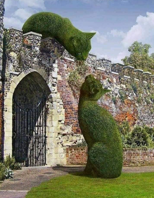 گربه های سبز