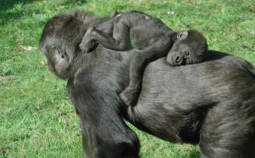 مهر و محبت مادری