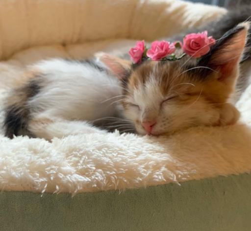 ملکه گربه ها