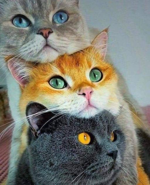 گربه های بازیگوش