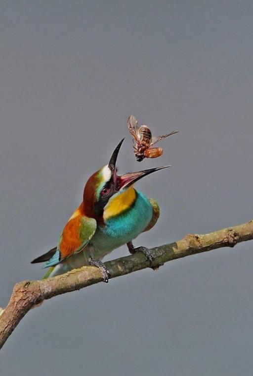 پرنده حشره خوار