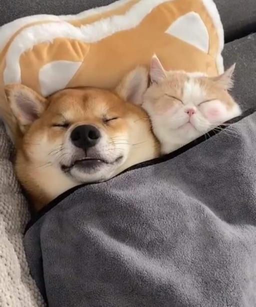 سگ ها و گربه ها می توانند دوستان بسیار خوبی برای یکدیگر باشند!