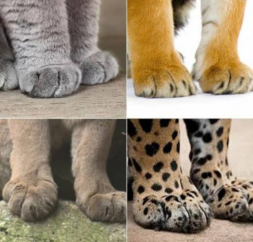 گربه سانان از نماهای مختلف