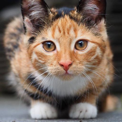 نگاه گربه