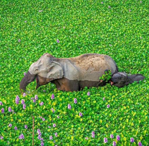فیل های شاد در حال آبتنی