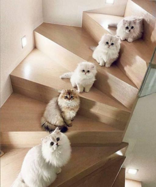 خانواده گربه ها