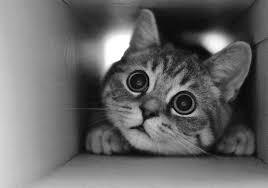 زیبایی گربه ها