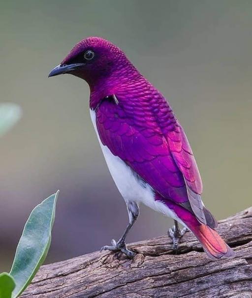 رنگ آمیزی زیبای طبیعت