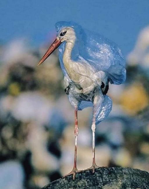 کیسه های پلاستیکی را در طبیعت رها نکنید