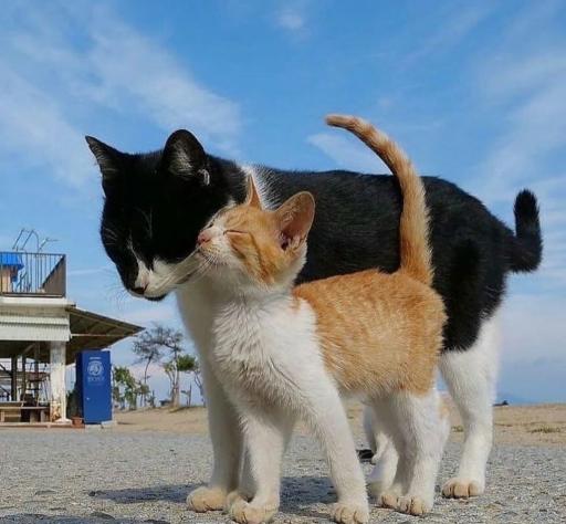 حس مادر و فرزندی