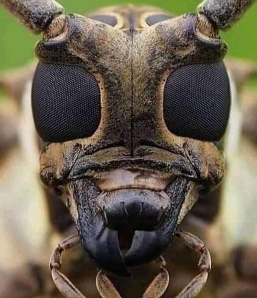 نمای نزدیک صورت زنبور عسل