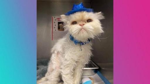 برگزاری جشن تولد گربه 19 ساله ای به نام «سامی» توسط کارکنان یک پناهگاه حیوانات در اوهایوی آمریکا